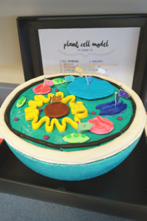 Glimpse Into A Classroom: Grade 8 Science - 3D Cell Models ...